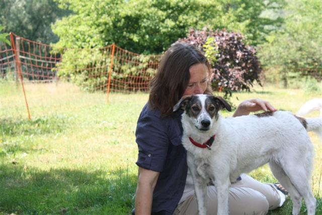 Gratiswebinar, Infos zum online-Basiskurs Tierkommunikation am 1. August, 11.00 Uhr